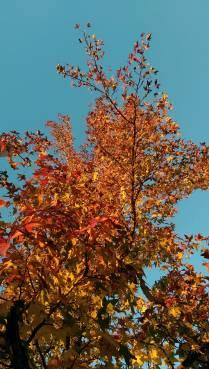 fall103114