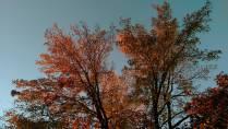 fall103114b
