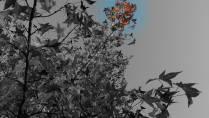fall103114BWfocal