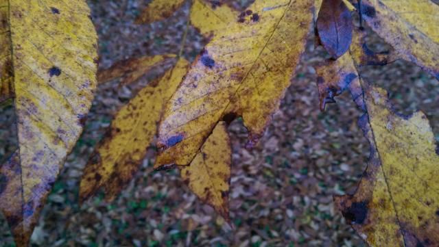 fall_10_26_14_a