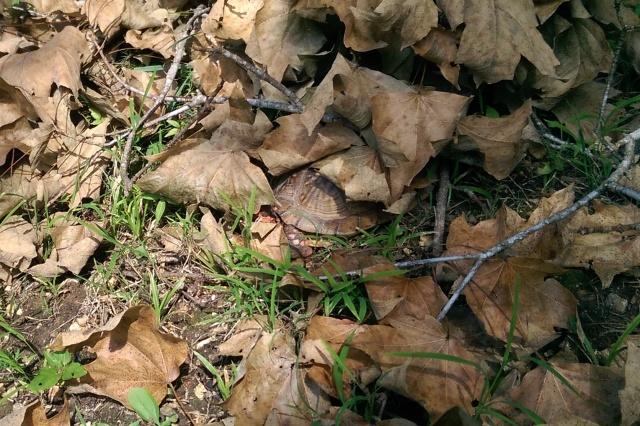 turtleflage