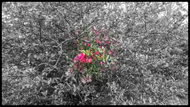 20150410flower