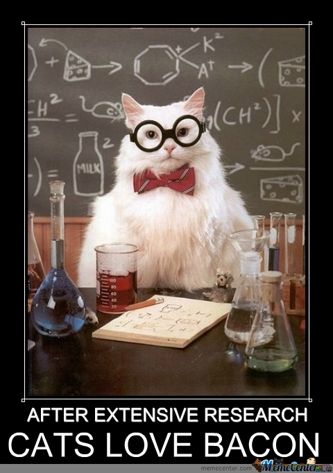 smart-cat