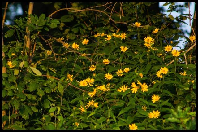 20150128flowers
