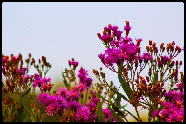 20150722flowers