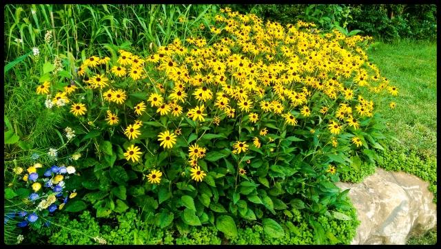 20150723flowers